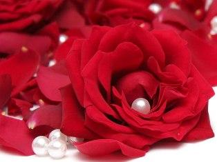 Житель Казахстана подарит жене букет из миллиона роз