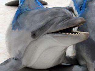 Дельфины выбрались из ледового плена в Крыму