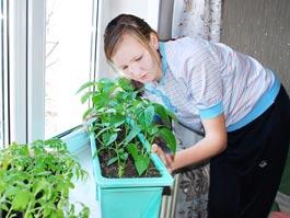 Защитите плодовые деревья от «весенней засухи»