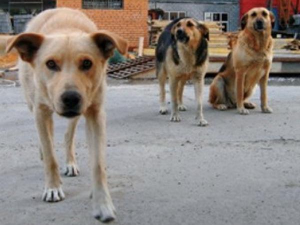 С начала года бродячие собаки покусали 98 ижевчан
