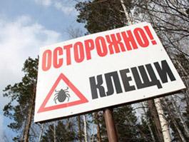 В Ижевске можно застраховаться от укусов клещей