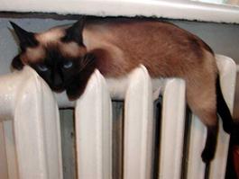 В Ижевске отключат тепло