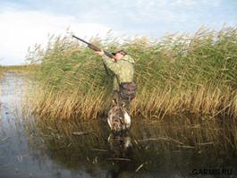 Охотники начали добычу уток и гусей в Удмуртии