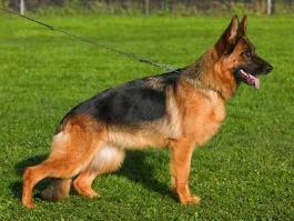 В Ижевске полицейские вернули хозяйке потерявшуюся собаку
