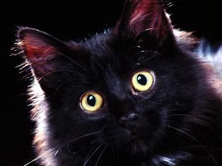 Черную кошку случайно постирали в машине
