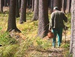 Жители Удмуртии выйдут на поиски пропавшего грибника