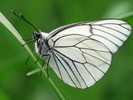 Урожаю ижевчан угрожает аномальное нашествие насекомых