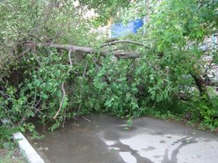 Ураганный ветер в Удмуртии валил деревья и срывал крыши с домов