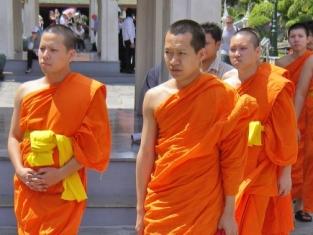 Около 80 буддистских монахов госпитализированы в Таиланде из-за нападения пчел