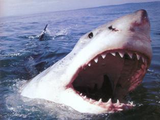 Власти Приморья из-за нападения акул запретили девушкам купаться в серебристых купальниках
