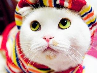 У хозяек кошек повышен риск самоубийства