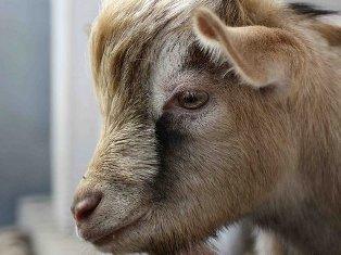 Нововведение в зоопарке Ижевска: зверей можно гладить и кормить