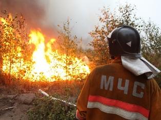 В одном из районов Удмуртии запретили ходить в лес