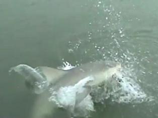 Ролик рыбаков из США «Акула! Акула!» бьет рекорды по просмотрам
