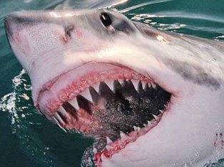 Акула напала на серфера и перегрызла его пополам