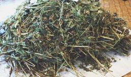 Полтора килограмма маковой соломы за сутки изъяли сотрудники полиции в Удмуртии