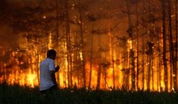 Медведев: ответственность за лесные пожары в России станет персональной