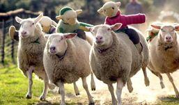 Ветеринары Удмуртии проверили партию овец, завезенную из Оренбурга, на сибирскую язву