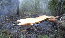 Из-за удара молнии в Удмуртии чуть не сгорел лес