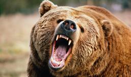 В норвежский дом вломились медведи и выпили 100 банок пива