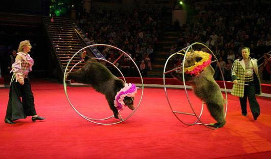 Знаменитый Цирк Никулина в Ижевске