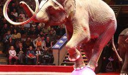 Администратора «Цирка  Никулина» обокрали в Ижевске
