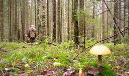 Пенсионерка из Удмуртии выжила, проведя в лесу 4 дня