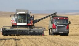 Лучший урожай зерна в Удмуртии получили в хозяйствах Вавожского района