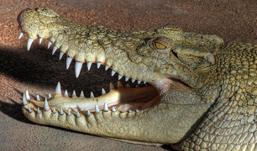В ижевском зоопарке посетителям покажут необычных муравьев и крокодилов