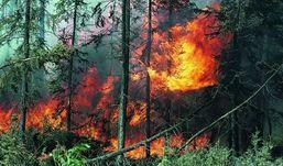 В Удмуртии могут ввести режим ЧС в связи с усыханием лесов