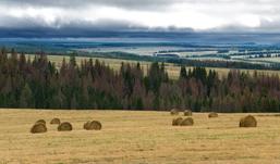 Режим чрезвычайной ситуации введен в лесах Удмуртии