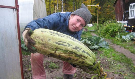 Чудо-урожай - 2012: Публикуем новую порцию дачных рекордов