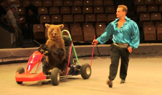 За кулисами Цирка Никулина: на арену выйдут медведи-вегетарианцы