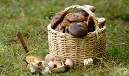Сколько стоит ведро белых грибов в Ижевске