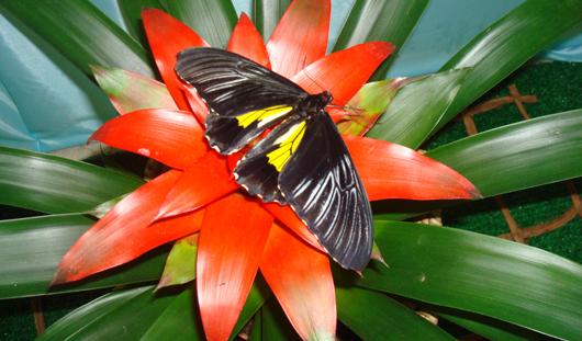Картины из кусочков крыльев сухих бабочек привезут в Ижевск