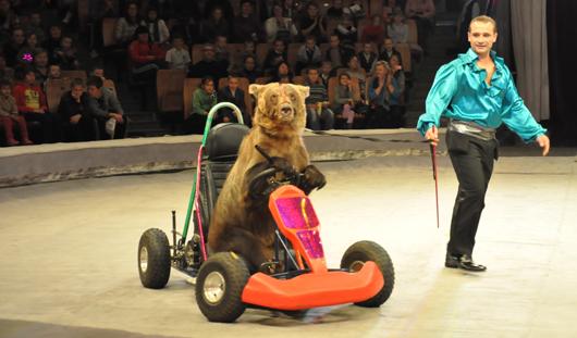 Цирк Никулина в Ижевске: «Колесо смерти», кошки, крутящие огонь, и медведи за рулем авто!