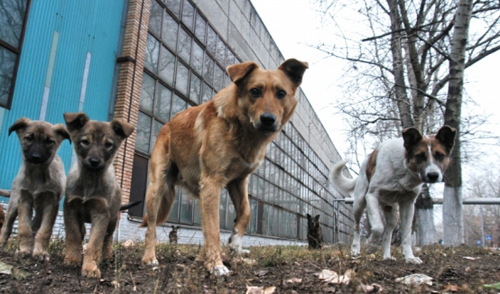 Ответственными в Удмуртии за отлов бродячих животных стали муниципальные власти