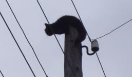 Кошка, трое суток просидевшая на столбе в Ижевске, сорвалась вниз