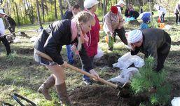 Парк Кирова в Ижевске стал богаче на 50 сосен