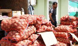 Картошку за 6 рублей можно было купить на ярмарке «Золотая осень» в Ижевске