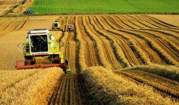 На 150 тысяч тонн зерна меньше соберут в Удмуртии в этом году