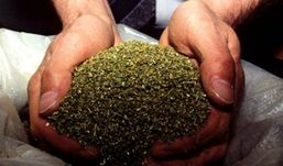 Около килограмма марихуаны изъяли полицейские у жителя Удмуртии