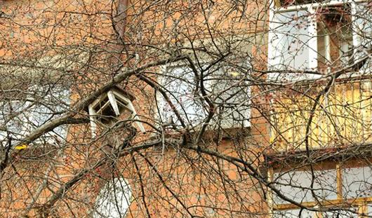 Фотофакт: на деревьях Ижевска растут табуреты