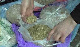 Больше 0,5 кг маковой соломы нашли у жительницы Алнашского района