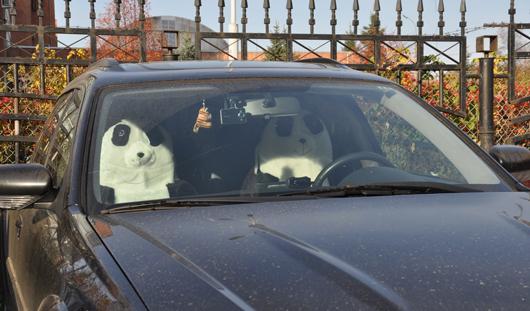 Фотофакт: ижевские панды рулят