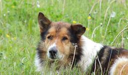 Собака помогла ижевчанке защититься от разбойника