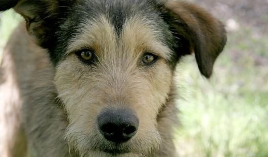Итальянка завещала своей собаке два миллиона евро