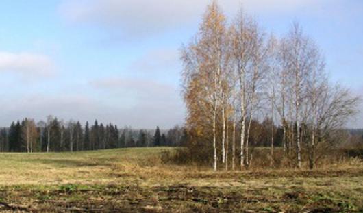 На этой неделе в Ижевске будет теплая погода