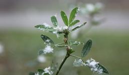 Зима в Ижевск придет к середине ноября