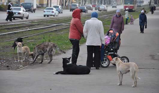 Ижевск хотят освободить от бездомных животных
